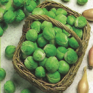 Brussels Sprout Fillbasket - Appx 100 Seeds